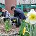 Frühlingsgrüße aus dem PG – fleißige Garten-AG bittet um Pflanzenspenden