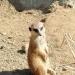 Tierpark-Rallye zum Abschluss der PG-Gesundheitswoche