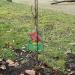 Garten-AG pflanzt Obstbäume und -sträucher